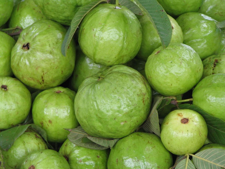 guava-1514365