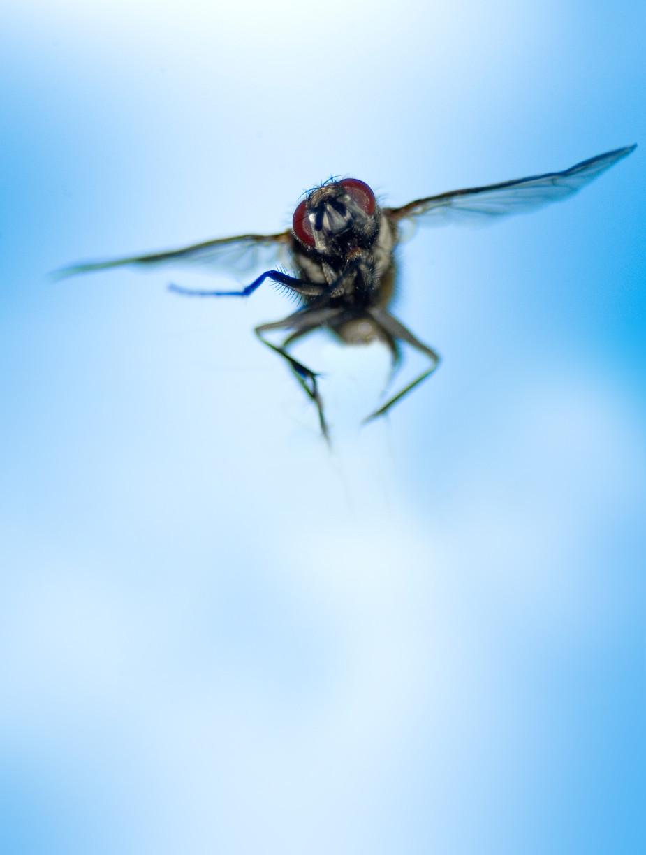 fly-1384348