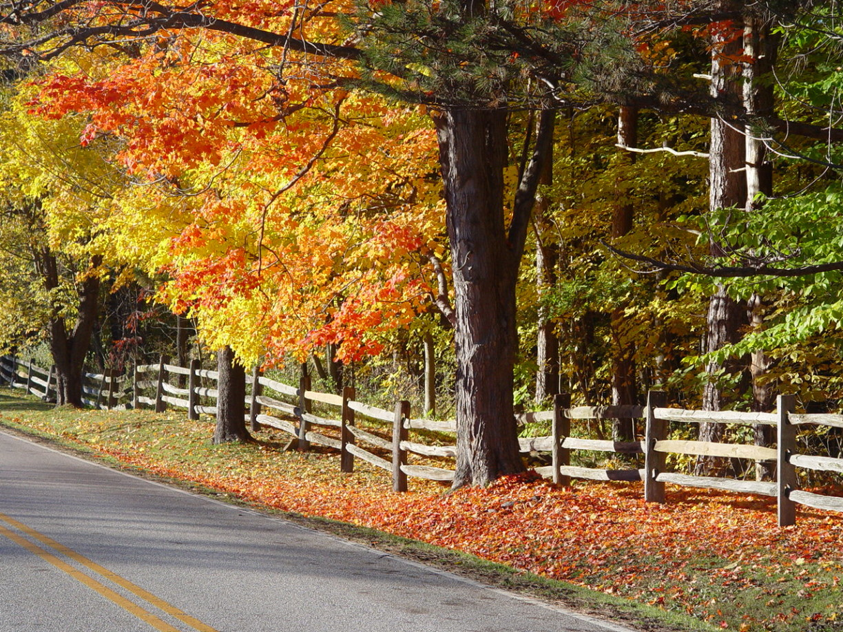 country-road-in-autumn-1173303