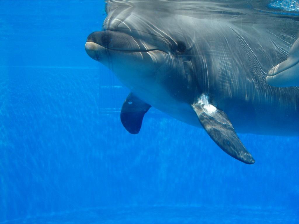 dolphin-1366639